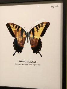 "Peter Holst Henckel fra serien ""World of Butterflies"" 2002, fra udstillingen ""Dyr i kunsten"" på Arken Kunstmuseum."