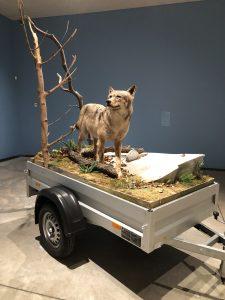 """Mark Dion """"Mobile Wilderness Unit – Wolf"""" 2006 fra udstillingen """"Dyr i kunsten"""" på Arken Kunstmuseum."""