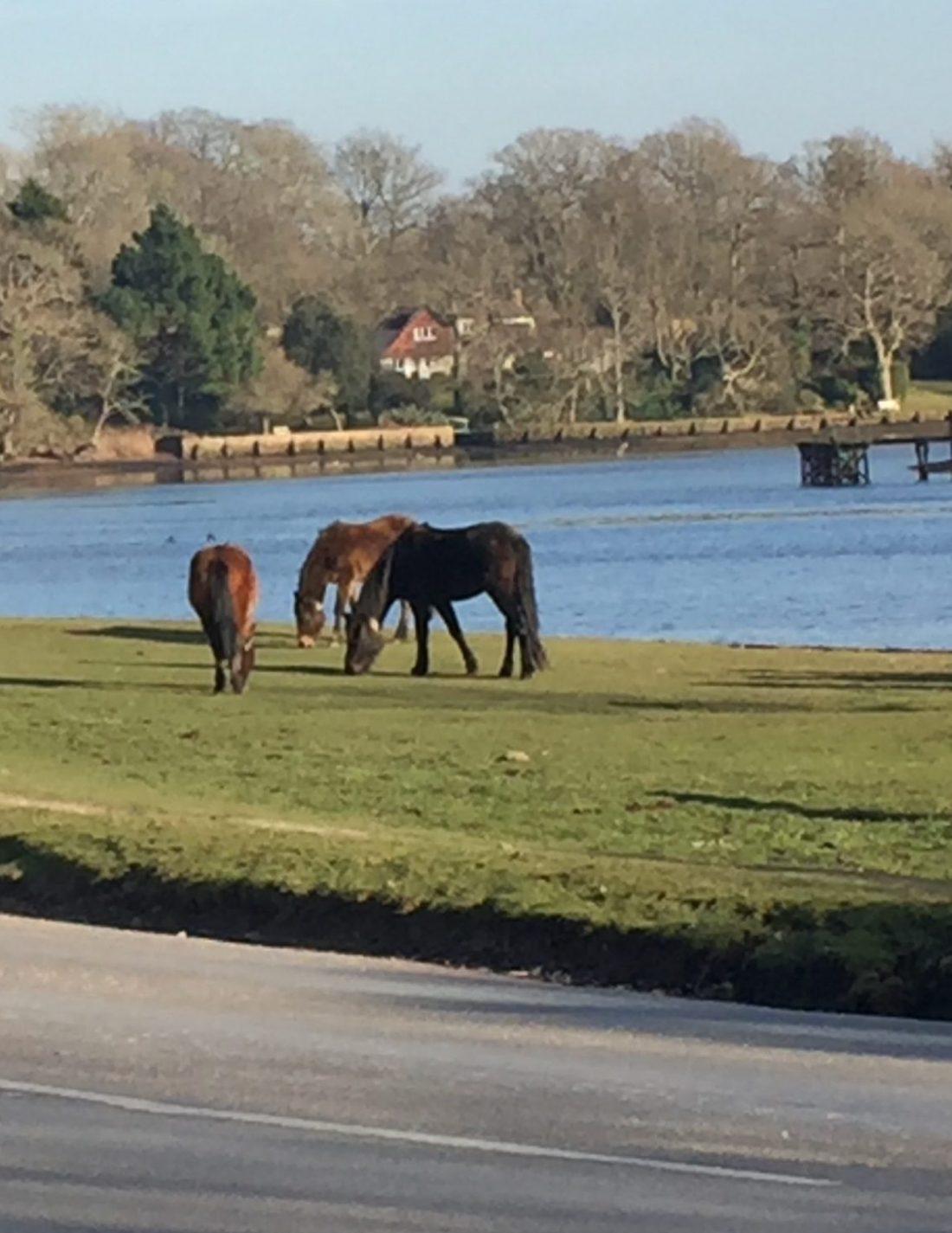 New Forest er vilde heste og magi kun et par timers kørsel fra London.